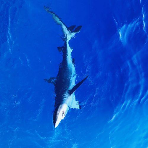 Kauai Deep Sea Fishing Charters